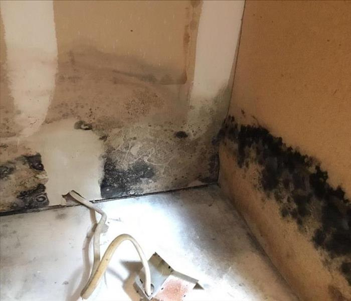 Water introduces Mold at Woodlands Home  Before