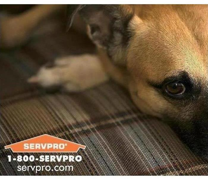 Puppy laying down with SERVPRO Logo